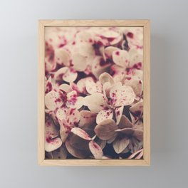 hydrangea - pink freckles Framed Mini Art Print