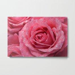 Pink love roses Metal Print