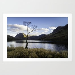 Lone Tree, Buttermere Art Print