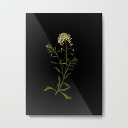 Iberis Amara Mary Delany Vintage Paper Flower Collage Floral Botanical Art Metal Print