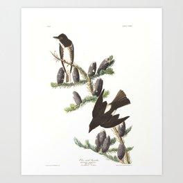 Olive sided Flycatcher by John Audubon Art Print