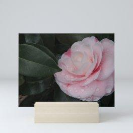 Pink Camellia Mini Art Print