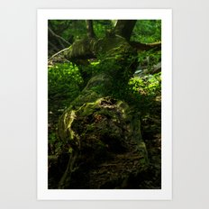 Nature's Way Art Print