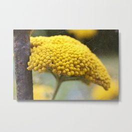 Vintage Yellow Yarrow Metal Print