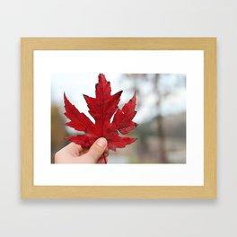 Canadian Leaf Framed Art Print