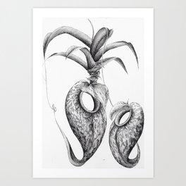 Nepenthes Aristolochioides Art Print