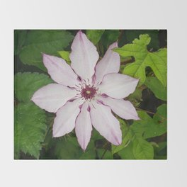 Pale Pink Clematis Throw Blanket