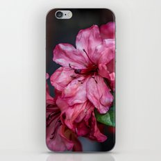 A Whole Bunch of Pink iPhone & iPod Skin