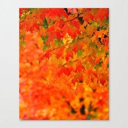 VIVID ORANGE MAPLE TREE FALL LEAVES Canvas Print