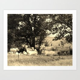 Charolais Family Cattle Photo Art Print
