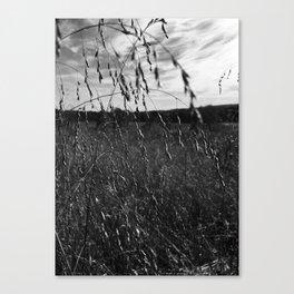 Cottonfield Number 1 Canvas Print