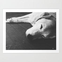 Napping Dog  Art Print