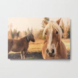 Horses v3 Metal Print
