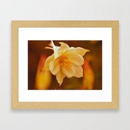 Columbine Beauty Framed Art Print