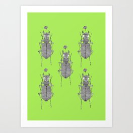 Tiger beetle 1 Art Print