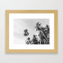 Palms Trees on the San Blas Islands, Panama - Black & White Framed Art Print