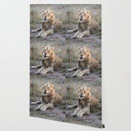 Male African Lion Wallpaper