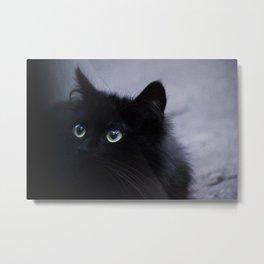 Photo of a Black Fluffy Cat Metal Print