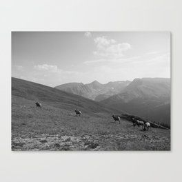 Rams, FILM Canvas Print