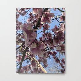 A Sky Full of Cherry Blossoms Metal Print