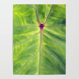 Taro leaf Poster