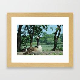 Deluxe Ducks #16 Framed Art Print
