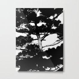 Kohama pine Metal Print