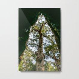 Giant Tingle Tree, Denmark, Western Australia Metal Print