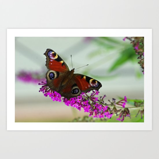 Butterfly Impression  Art Print