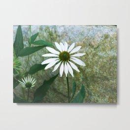 White Coneflower Metal Print