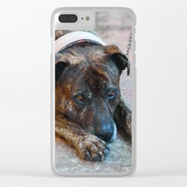 BAILEY.... Clear iPhone Case