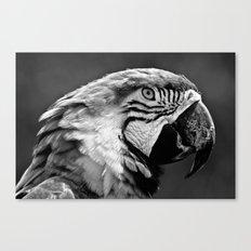 Black & White Parrot  Canvas Print
