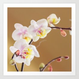 Mum Loves Orchids Art Print