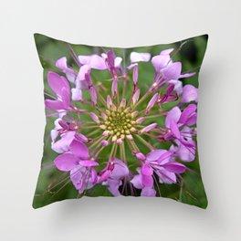 Cleome No. 19 Throw Pillow