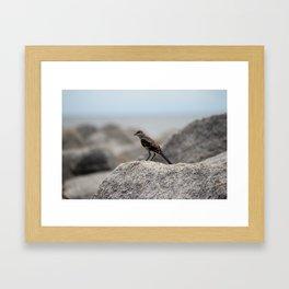 Bird On A Rock By The Sea Framed Art Print