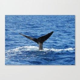 Whale Fluke Canvas Print