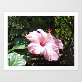 Stunning Pink Flower Art Print