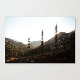 sunset in angeles crest forest Canvas Print