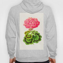 Vintage Botanical Illustration Beautiful Pink Flower Lush Green Leaves Scientific Floral Drawing Hoody