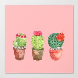 Three Cacti watercolor pink Canvas Print