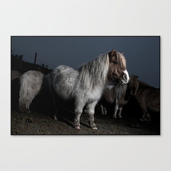 DARTMOOR PONYS FLASHED2 Canvas Print