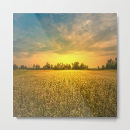 Landscape, sunny dawn in a field Metal Print