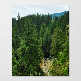 Vancouver Coastal Rainforest Canvas Print