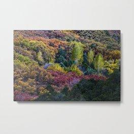 Fall Colors ~ La Sal Mountains, Utah Metal Print