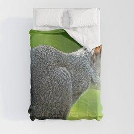 Squirrel Comforters