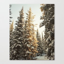 Snowy Pine Trees Glowing in Sunlight Canvas Print