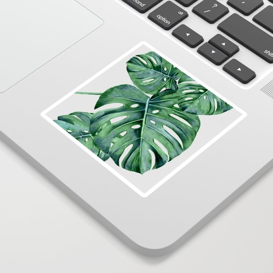 Monstera by nadja1