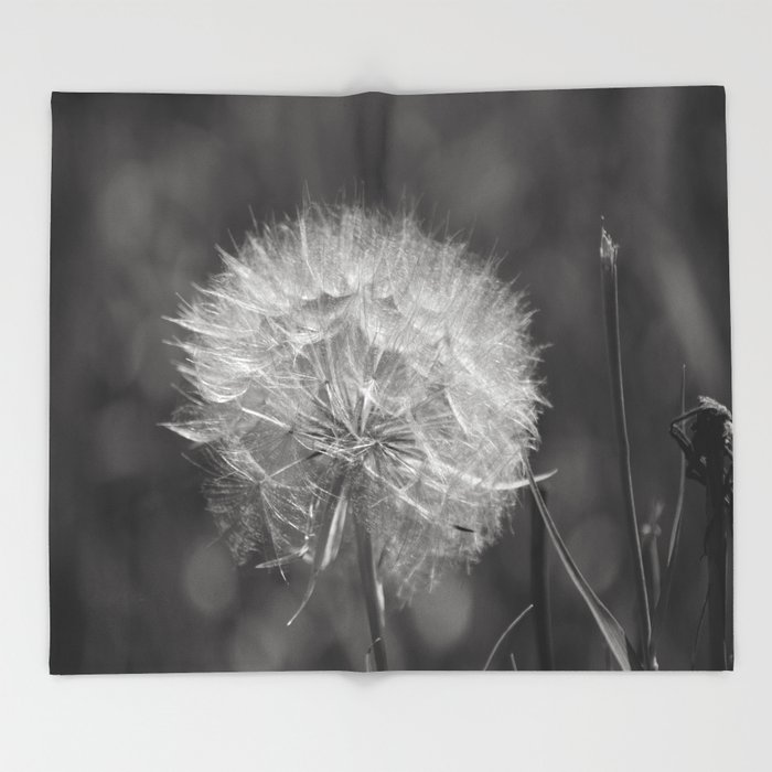 Lovely Fluffy White Seed Head Nature Lover's Gift ~ Make A Wish Throw  TZ96