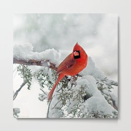 Cardinal on Snowy Branch (sq) Metal Print