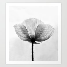 XRAY FLOWER [transparent black white poppy petals] Art Print